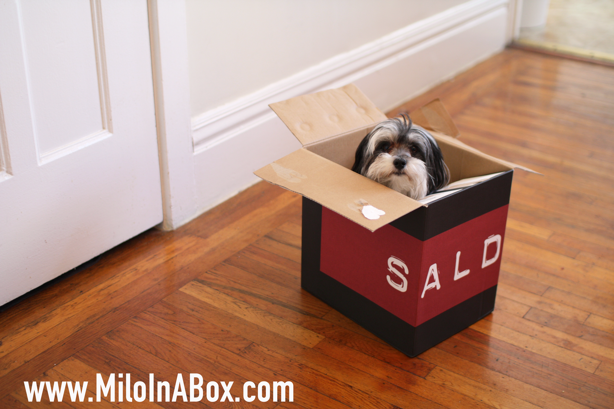milo_in_a_box_saldo